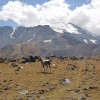 Ararat 2010